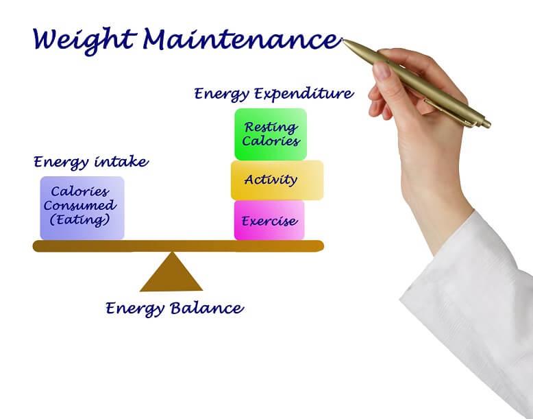 maintenance diet plan